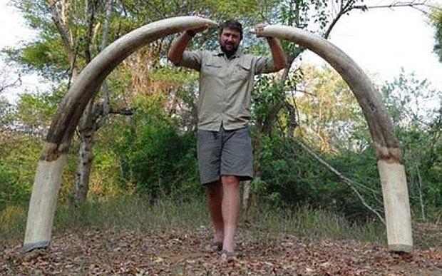 Zimbabwe elephant hunt...