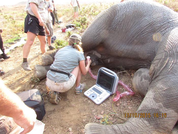©Kariba Animal Welfare Fund Trust