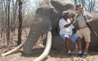 elephant-shot-zimbabwe