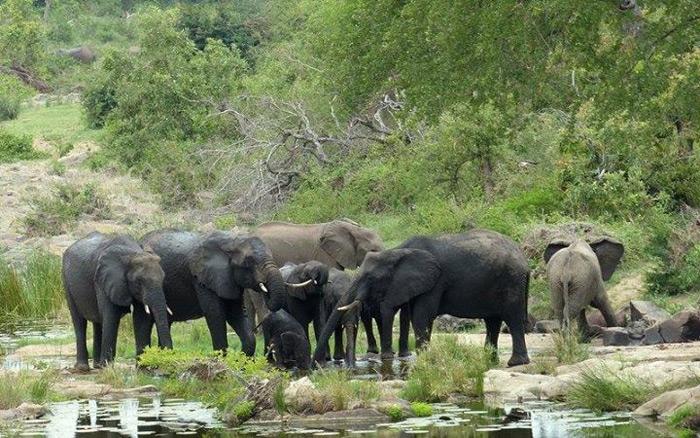 elephants-in-kruger