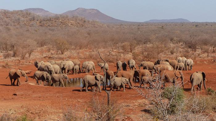 elephants-in-madikwe