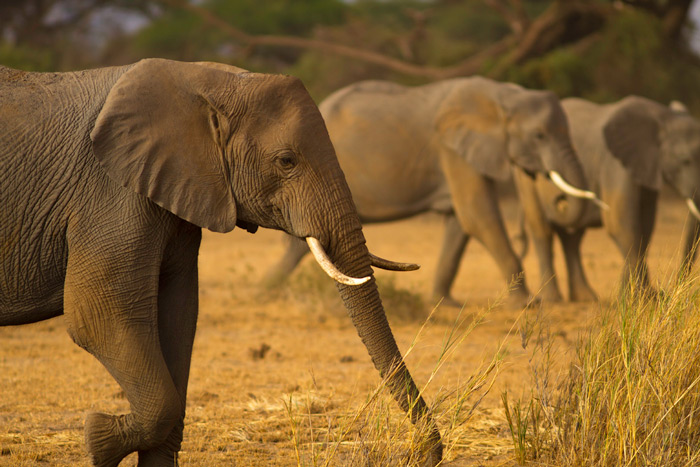 family-of-tuskers