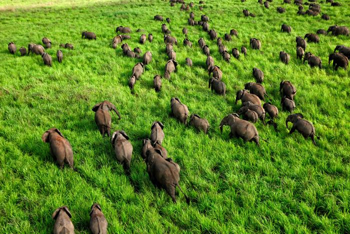 © David  Santiago Garcia/ African Parks
