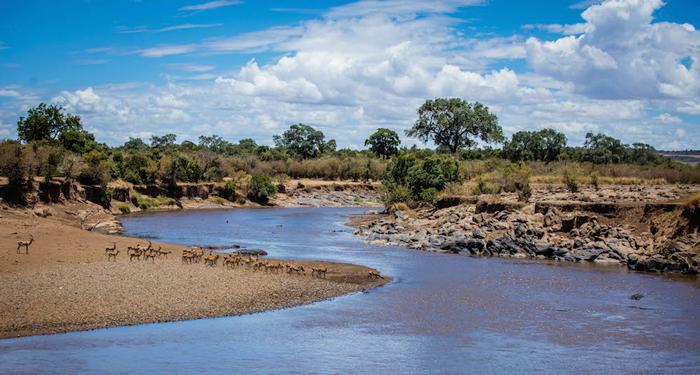 gazelles-kenya-safari