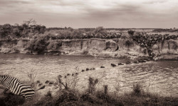 great-migration-mara-river