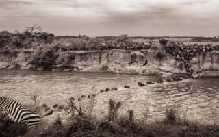 great-migration-mara-river