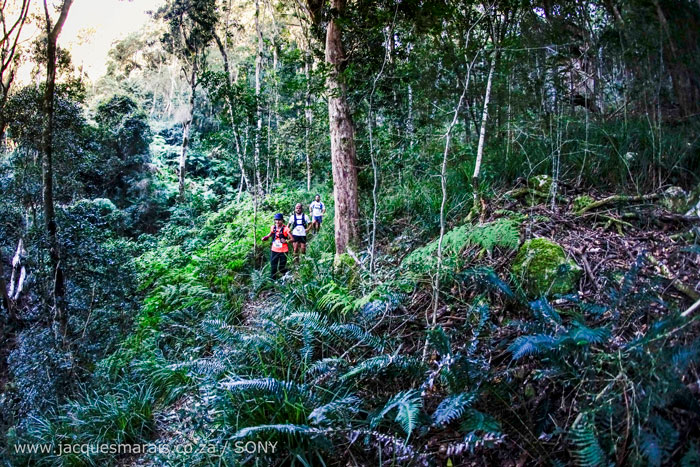 South African Indigenous Forest Needs Your Vote Africa