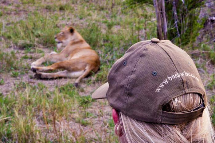 injured-lioness-bushwise