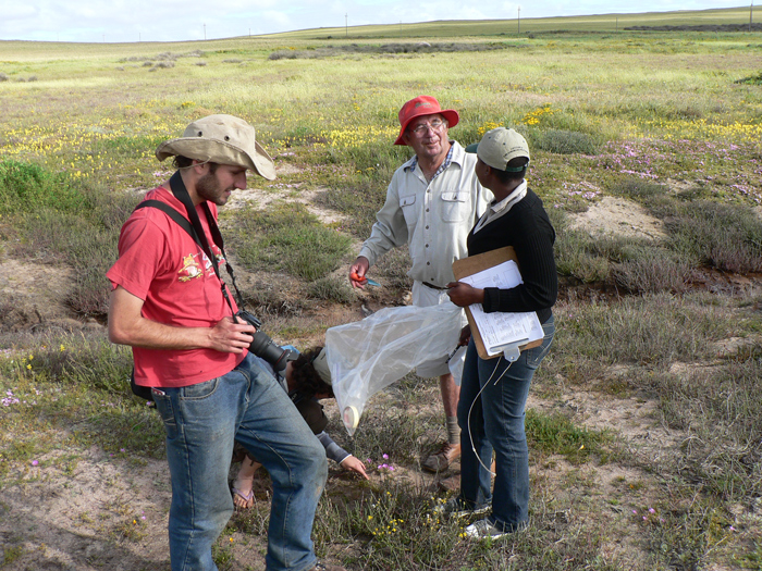 Almost extinct. Oom Koss Claassens (CREW volunteer) explain how to locate Lachenalia mathewsii to Vatishwa Zikishe a CREW staff member. Picture by Ismail Ebrahim.