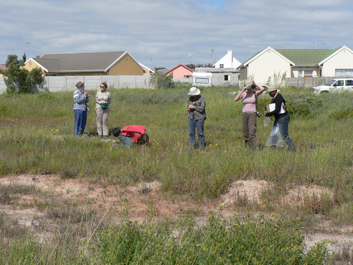 CREW volunteers searching for Lachenalia. mathewsii plants on municipal ground west of Vredenburg, Western Cape, South Africa. Picture by Ismail Ebrahim.