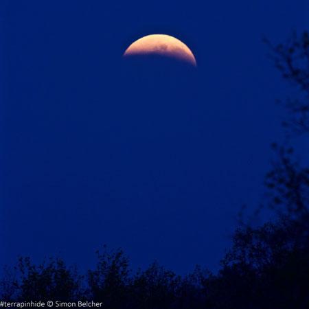 moon-from-terrapin-hide-madikwe