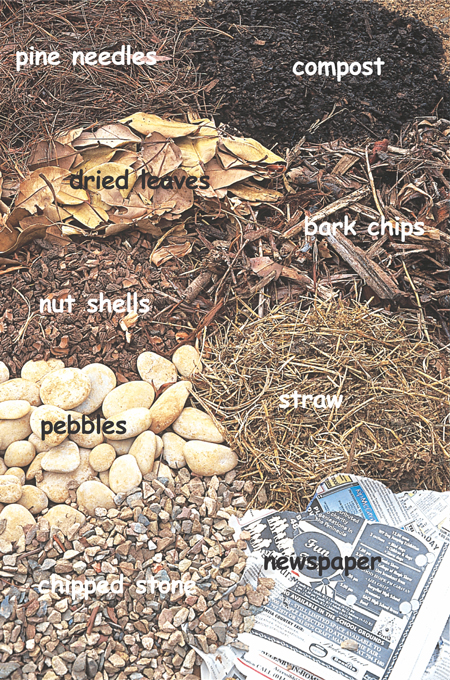 The different types of mulch © Alice Notten