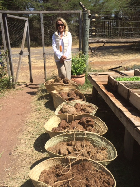 Oria Douglas-Hamilton of Save the Elephants admires our elephant poo collection!