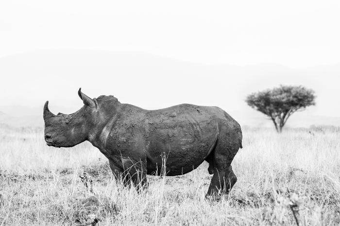 rhino-river-lodge-rhino