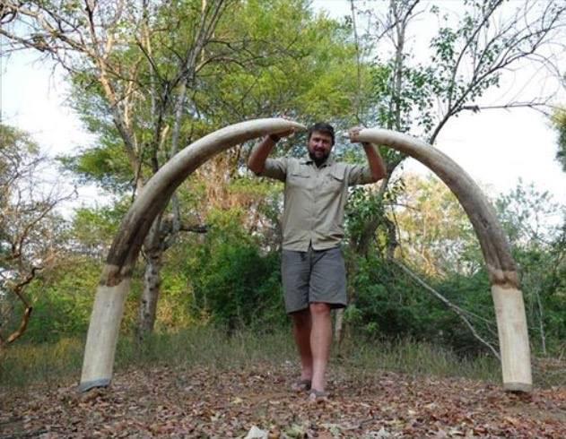 tusks-elephant-shot-zimbabwe