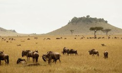 Sayari Camp, Serengeti National Park © Asilia Africa.