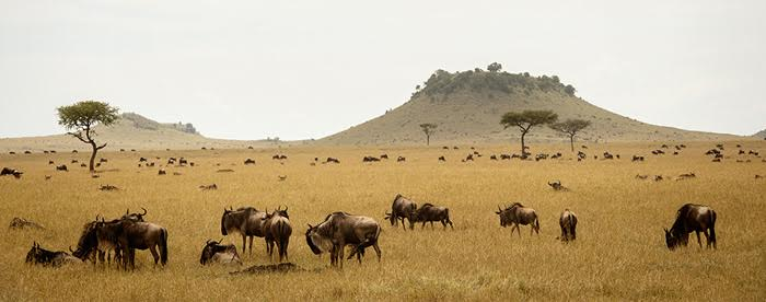 Sayari Camp, Serengeti National Park © Asilia Africa.