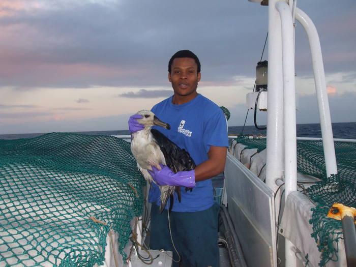 A rescued albatros © WWF South Africa