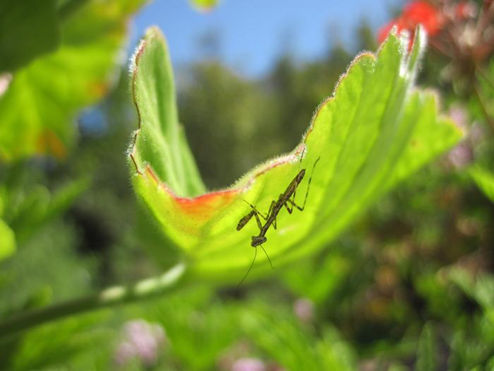 Attract biodiversity to your garden © Catherine Browne