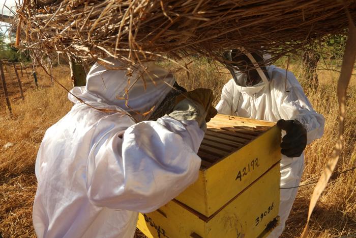 Bee_Fence-kenya