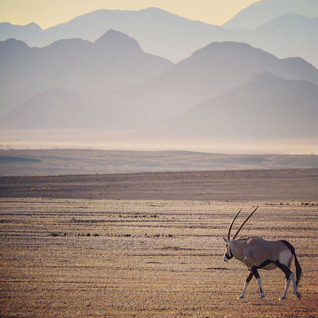 A simple, yet beautiful background really helps to highlight the oryx in this image by Brenden Simonson