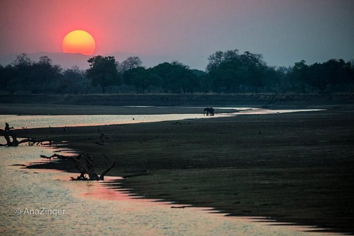 Elephant-Sunset-in-Zikomo
