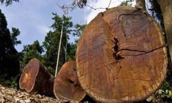 Mhoje-logging