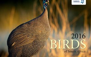 birdlife-calendar-2016