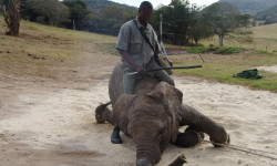 elephant-abuse