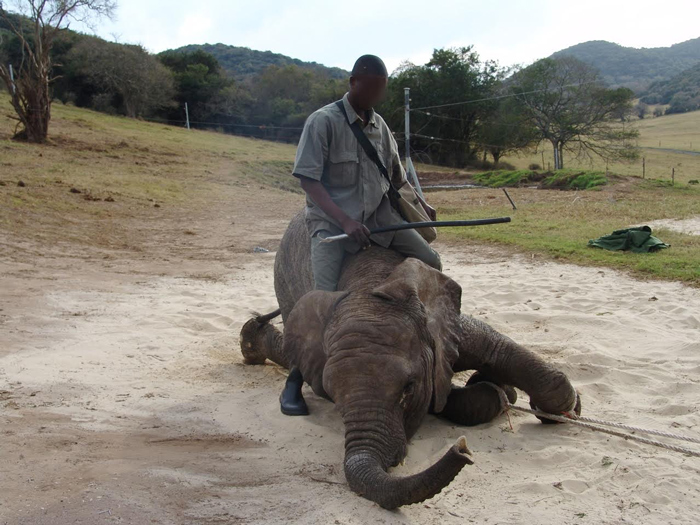 Elephant Park In Knysna Relieved Of Animal Cruelty Charges