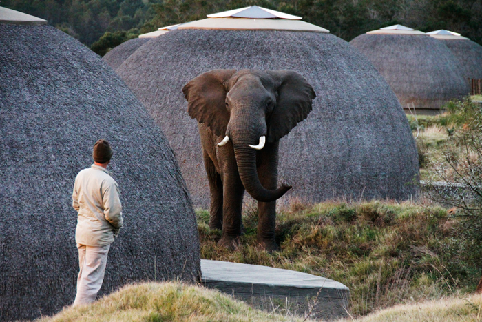 elephant-in-kwena-lodge