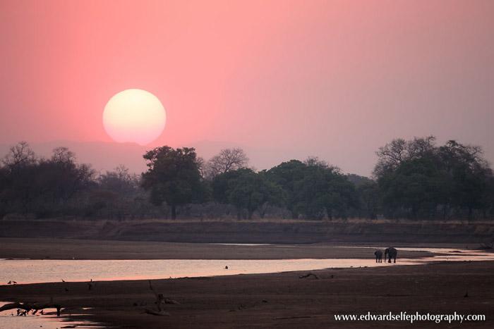 elephant-sunset