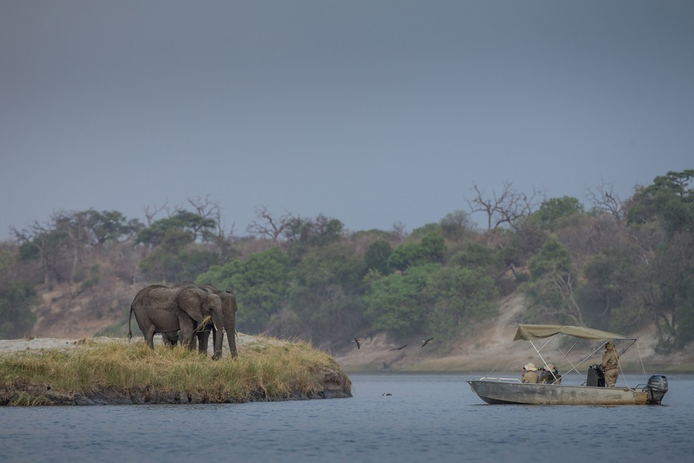 Elephants from a boat cruise on the Chobe River