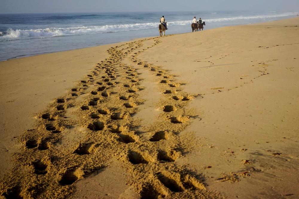 Go for a gallop along the beach ©Jacques Marais