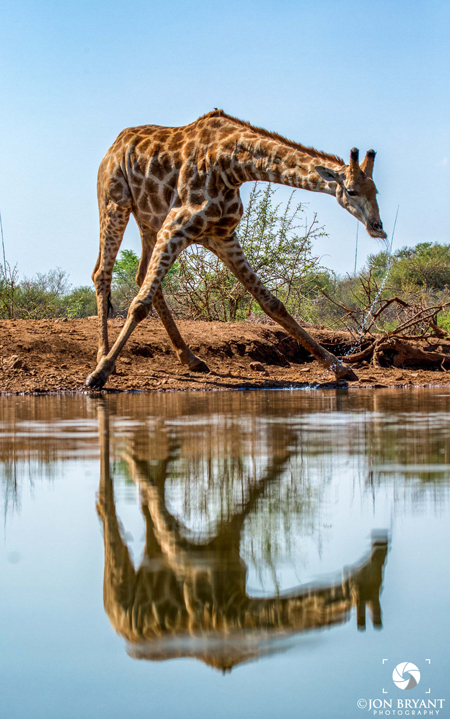 jacis-lodge-giraffe-waterhole