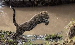 leoaprd-cub-kenya