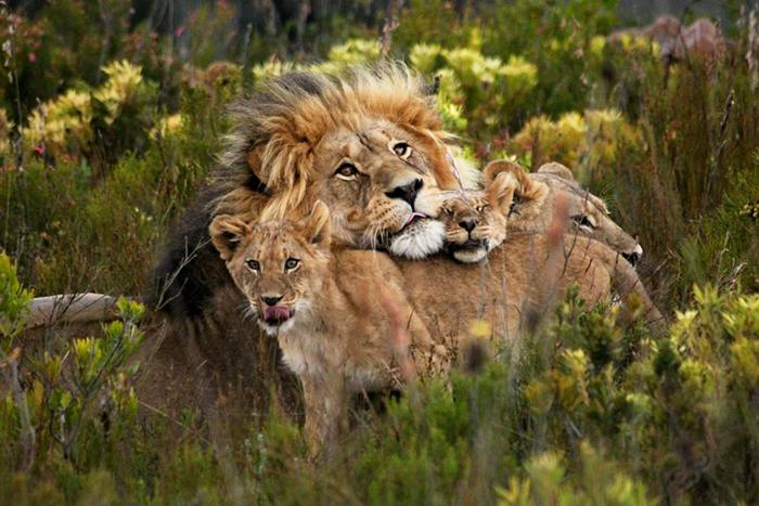 © Gondwana Game Reserve