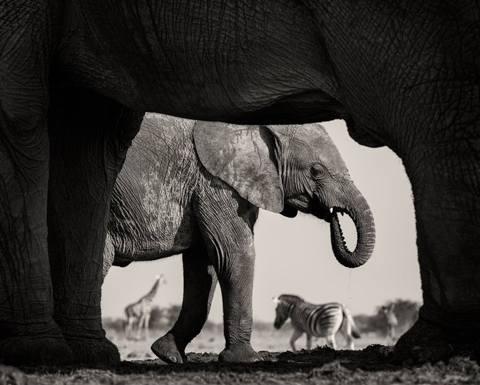 Natural Frame © Morkel Erasmus / Wildlife Photographer of the Year 2015