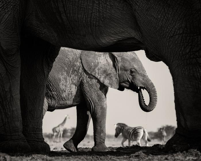 Natural Frame © Morkel Erasmus / Wildlife Photographer of the Year 2015