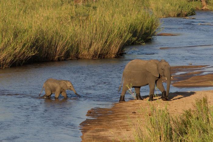 ©Michael Lorentz, Conservation Action Trust