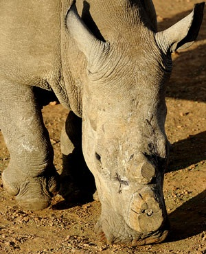 Aerial anti-poaching unit grounded due to incompetency - Africa