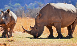©Youth 4 African Wildlife