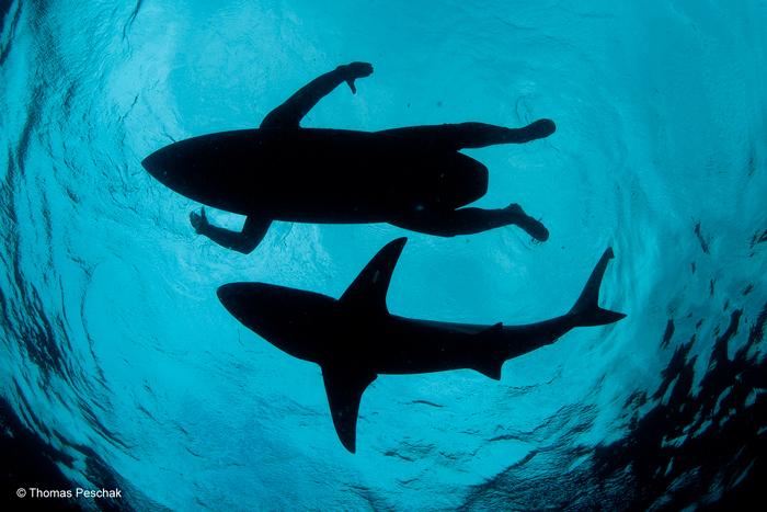 The shark surfer © Thomas P Peschak/ Wildlife Photographer of the Year 2015