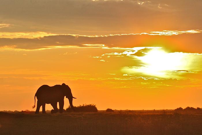 ©Francis Garrard, Conservation Action Trust
