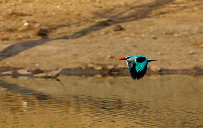 trying-to-get-perfect-shot-of-kingfisher
