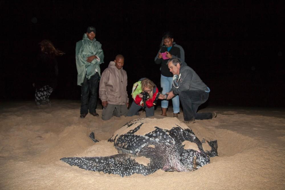 Don't miss turtle nesting season ©Scott Ramsay, LoveWildAfrica.com