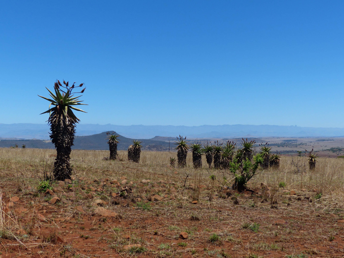 view-at-three-trees