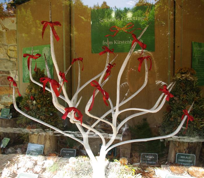 An aloe Christmas tree ©Megan Blatchford