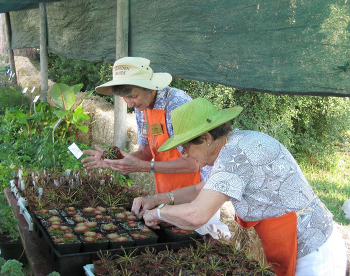 Botanical Society volunteers prepping plants for annual plant fair © Catherine Browne