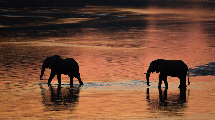 Elephants-Sunset-South-Luangwa
